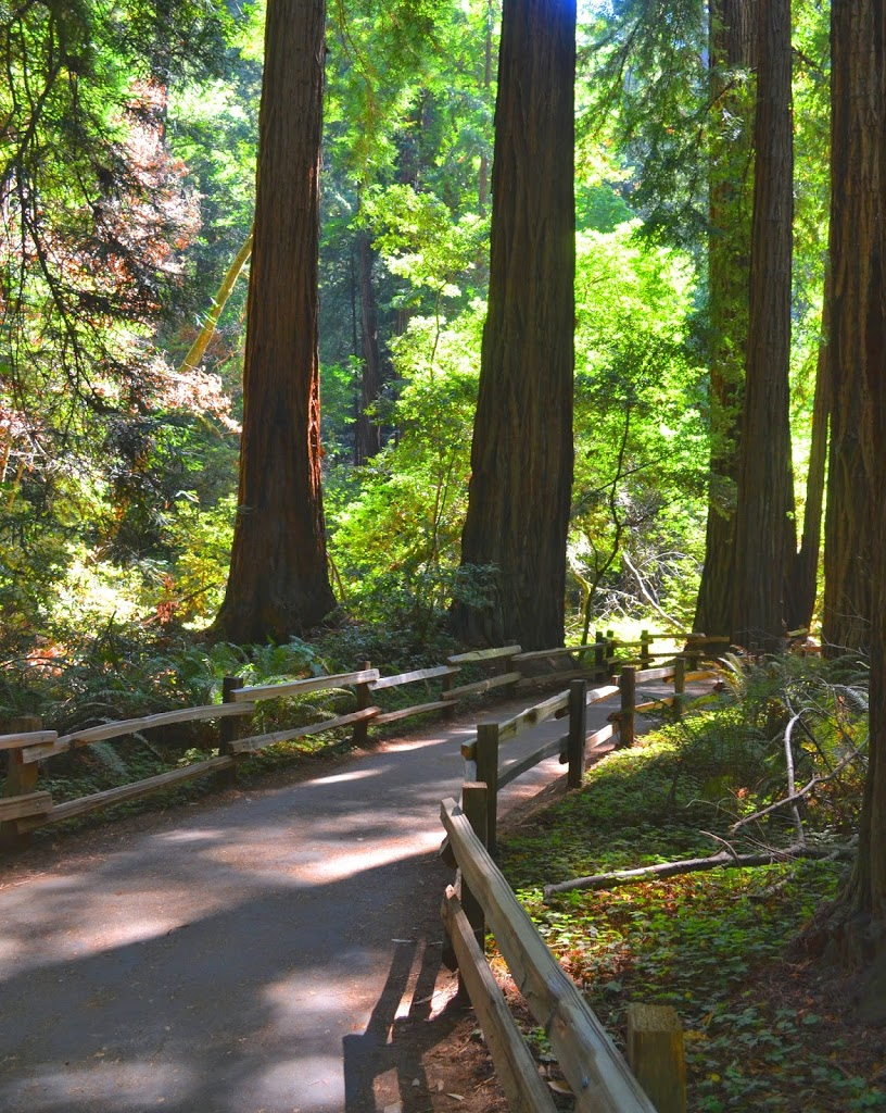 muirwoods_forest_landscape_originalphotography3