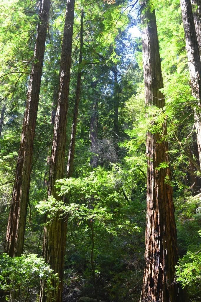 muirwoods_forest_landscape_originalphotography6