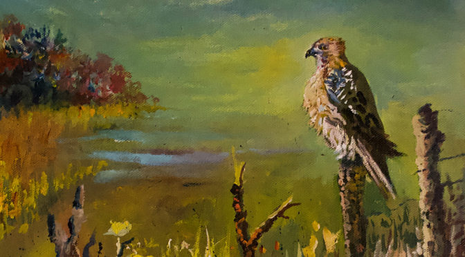 The Watchman: Red Tailed Hawk