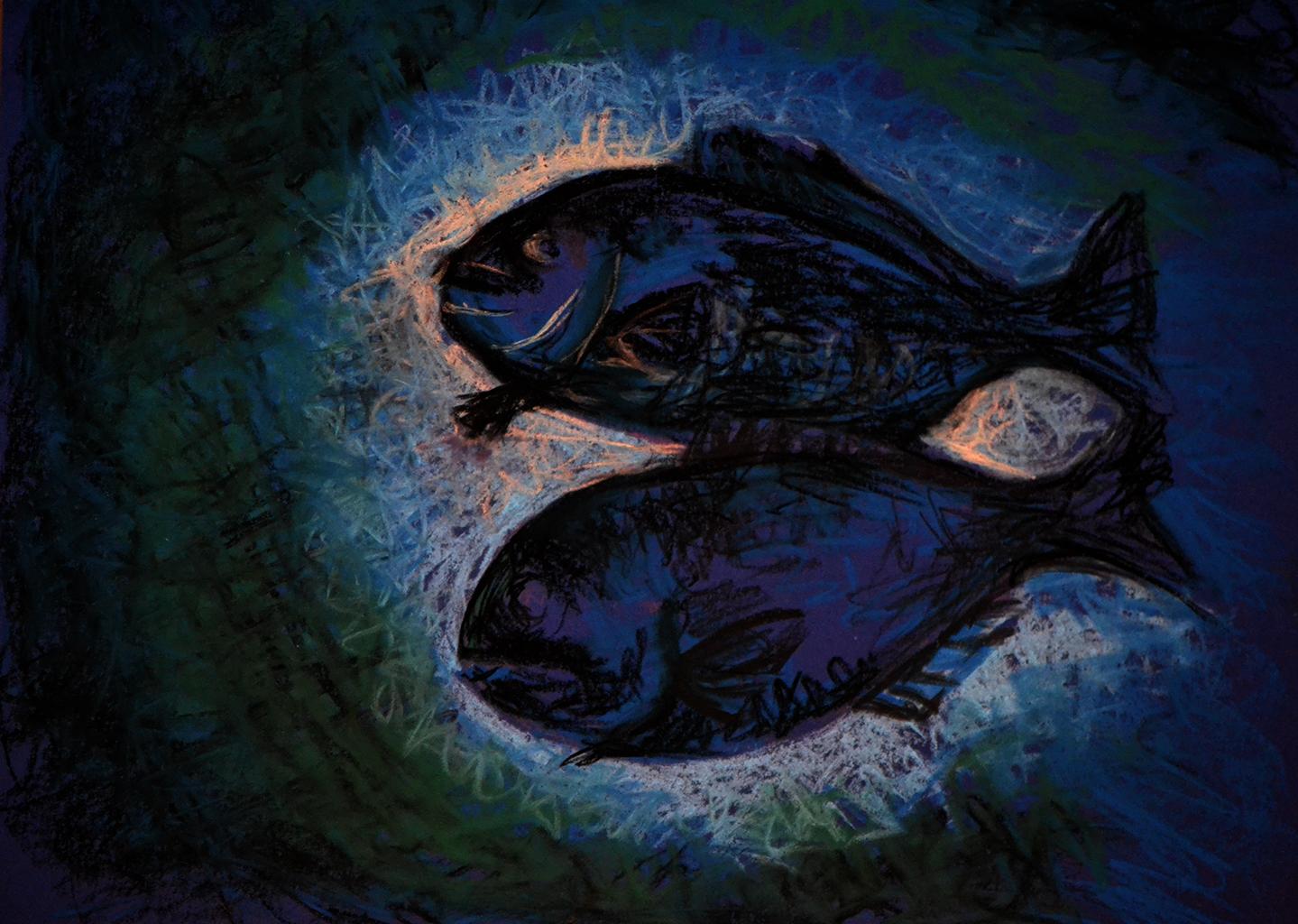 Rockfish from beneath